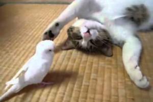 猫と鳥が遊んでいる動画