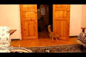 マリオの音に合わせてジャンプする猫が可愛すぎる 動画